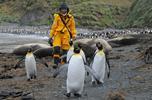 """""""Katharsis II"""" wśród pingwinów na Macquarie Island - te zdjęcia trzeba zobaczyć!"""